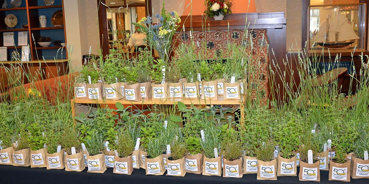 """""""50th Herbs"""